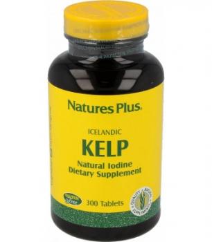 Kelp Alge, 300 Stk.